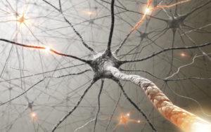 Sinapsis: las conexiones entre neuronas